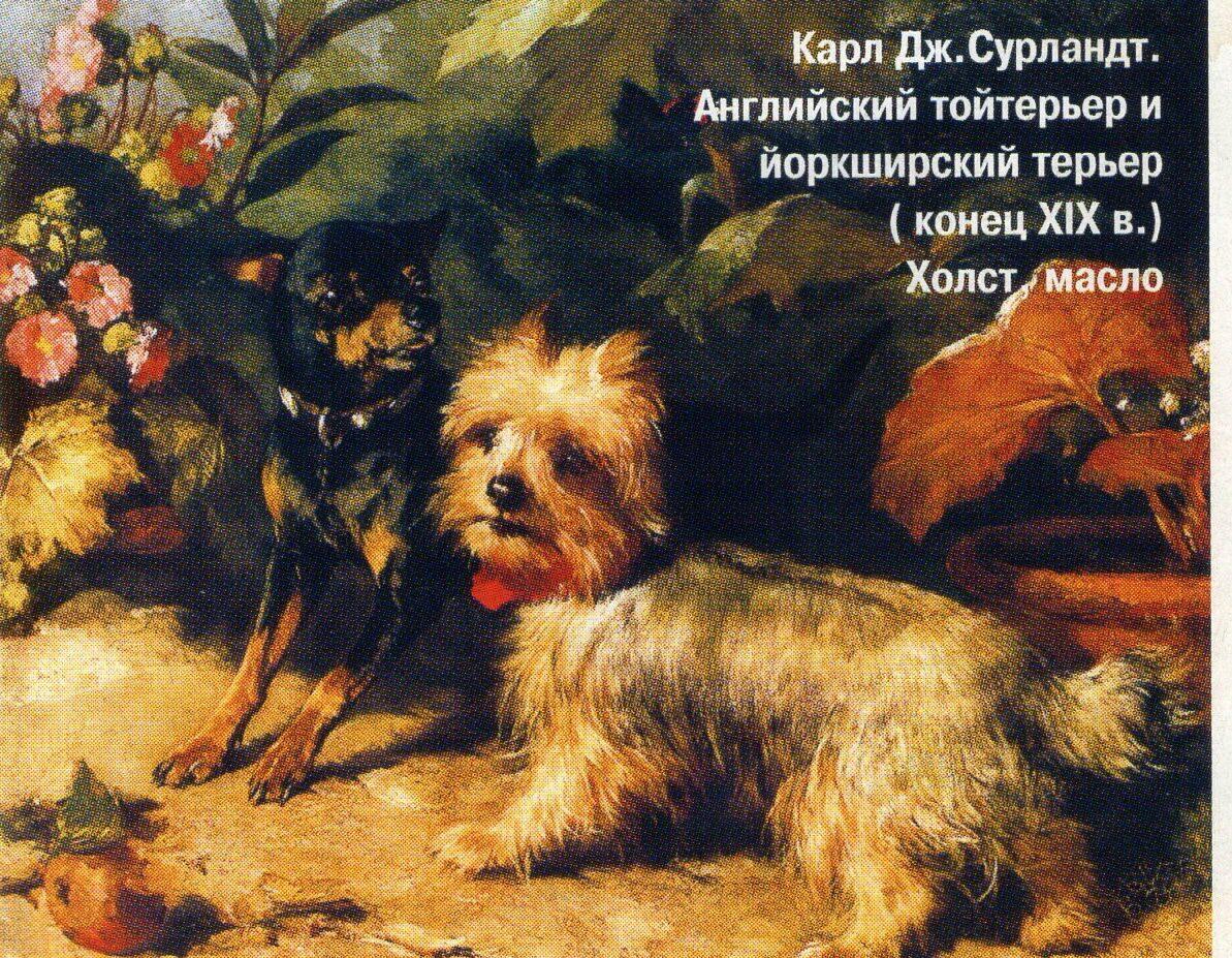 Йоркширский терьер | Собаки Вики | Fandom | 927x1193